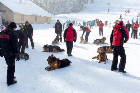 red cross: Sofia, Bulgaria - 29 de enero de 2015: Los equipos de rescate del Servicio de Rescate de Monta�a de la Cruz Roja de Bulgaria est�n participando en un cource entrenamiento con sus perros de servicio que tuvieron lugar en la monta�a Vitosha cerca de Sof�a.
