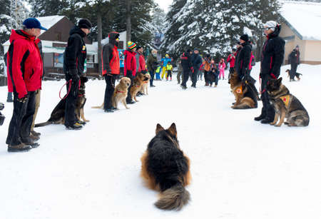 red cross: Sofia, Bulgaria - January 29, 2015: Rescuers from Mountain Rescue Service at Bulgarian Red Cross are participating in a training cource with their service dogs which took place at Vitosha mountain near Sofia. Editorial