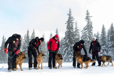 rescue service: Sofia, Bulgaria - January 29, 2015: Rescuers from Mountain Rescue Service at Bulgarian Red Cross are participating in a training cource with their service dogs which took place at Vitosha mountain near Sofia. Editorial