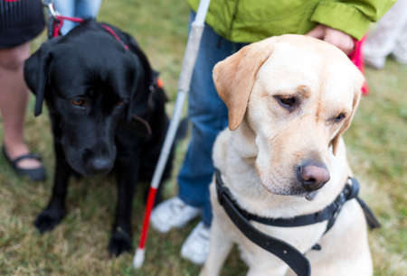 using senses: Blind people and guide dogs during the last training for the animals. The dogs are undergoing various trainings before finally given to the physically disabled people.