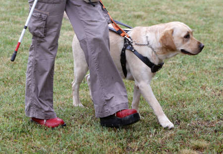 physical impairment: A blind person is led by her golden retriever guide dog during the last training for the dog. The dogs are undergoing various trainings before finally given to the physically disabled people. Stock Photo