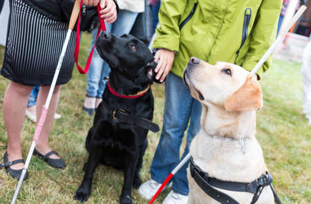 Blind people and guide dogs during the last training for the animals. The dogs are undergoing various trainings before finally given to the physically disabled people.