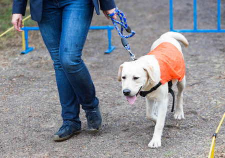 A blind person is led by her golden retriever guide dog during the last training for the dog. The dogs are undergoing various trainings before finally given to the physically disabled people. 版權商用圖片