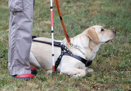 visual perception: A blind person is led by her golden retriever guide dog during the last training for the dog. The dogs are undergoing various trainings before finally given to the physically disabled people. Stock Photo