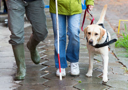 A blind person is led by her golden retriever guide dog during the last training for the dog. The dogs are undergoing various trainings before finally given to the physically disabled people. Standard-Bild