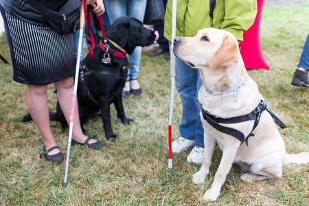 Blinden en blindengeleidehonden tijdens de laatste training voor de dieren. De honden ondergaan diverse trainingen voordat ze uiteindelijk aan de lichamelijk gehandicapten.