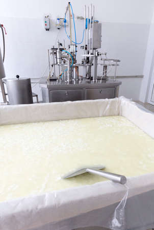 batch: A dairy tank with buffalo cheese in a small family creamery is preparing a cheese batch. The dairy farm is specialized in buffalo yoghurt and cheese production.