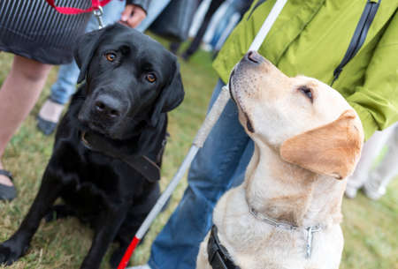 physically: Blind people and guide dogs during the last training for the animals. The dogs are undergoing various trainings before finally given to the physically disabled people.