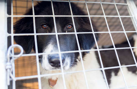 locked in: Homeless dog is being locked in a cage.