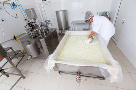 batch: Karlovo, Bulgaria - June 19, 2015: A cheesemaker is preparing a batch of cheese in a small family creamery. The dairy farm is specialized in buffalo yoghurt and cheese production.
