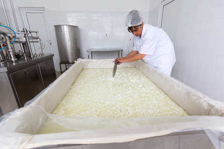 creamery: Karlovo, Bulgaria - June 19, 2015: A cheesemaker is preparing a batch of cheese in a small family creamery. The dairy farm is specialized in buffalo yoghurt and cheese production.