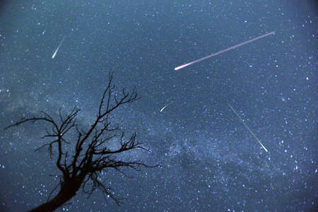 Composite image of shooting stars with a silhouette of a small tree during the 2015 Perseid Meteor Shower. Banque d'images