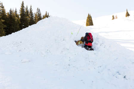 rescue service: Saviors from the Mountain Rescue Service at Bulgarian Red Cross are training with their rescue dogs a situation of people buried in an avalanche.