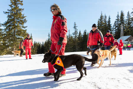 rescue service: Sofia, Bulgaria - January 28, 2016: Saviors from the Mountain Rescue Service at Bulgarian Red Cross are training with their rescue dogs a situation of people buried in an avalanche.