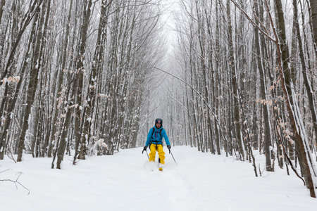 risking: Sofia, Bulgaria - February 5, 2016: A skier is skiing among trees in a snowy forest in the mountain during winter. Editorial