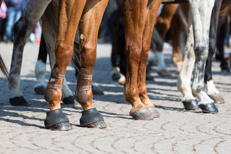 animal st  patricks day: The legs of horses of Horse police units. Policemen and policewomen are participating in a parade at Saint Theodores day.