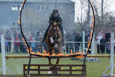 policewomen: Sofia, Bulgaria - March 19, 2016: A policeman from Horse police unit in jumping with his horse above a fire barrier while participating in a parade at Saint Theodores day.