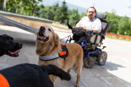 Sofia, Bulgaria - June 21, 2016: An assistance dogs are shown during a performance before given to an individual with a disability. The animal is trained by an assistance dog organization with the help of a professional trainer.