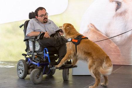 persona en silla de ruedas: Sofía, Bulgaria - 21 de junio 2016: Un perro de asistencia se muestra durante una actuación antes dado a un individuo con una discapacidad. El animal está entrenado por una organización perro de asistencia con la ayuda de un entrenador profesional.