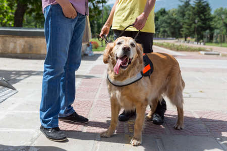 unsighted: An assistance dog is trained to aid or assist an individual with a disability.