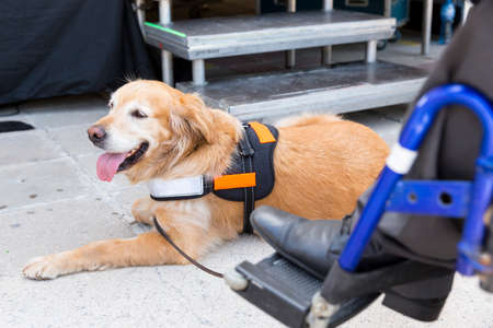 An assistance dog is trained to aid or assist an individual with a disability.