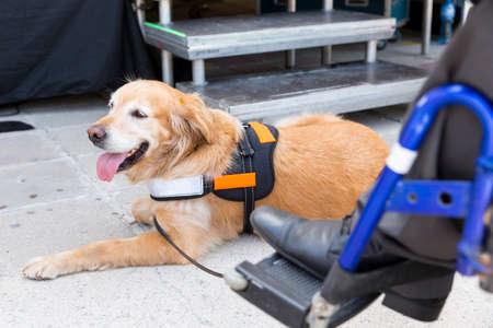 Een hulphond is opgeleid om te helpen of een individu te helpen met een handicap.
