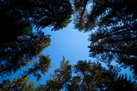 beneath: A view of the stars of the night sky from beneath a pine trees forest. Night sky nature summer landscape. Stock Photo