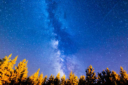 A view of the stars of the Milky Way with a pine trees forest in the foreground. Night sky mountain summer landscape.