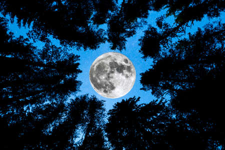 A view of the Super Moon with pine trees forest silhouette in the foreground. Night sky nature summer landscape. Stock Photo