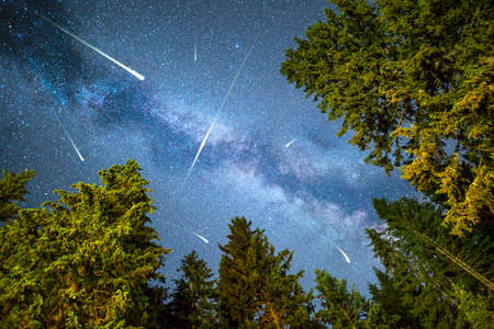 hundreds: A view of a Meteor Shower and the Milky Way with a pine trees forest illuminated in the foreground. Night sky nature summer landscape. Perseid Meteor Shower observation.