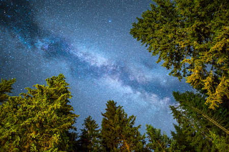 A view of a Meteor Shower and the Milky Way with a pine trees forest illuminated in the foreground. Night sky nature summer landscape. Perseid Meteor Shower observation.