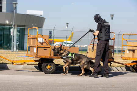 Customs and border protection officer and Drug enforcement administration special force participates with a specialized dog in a training at the airport for searching and seizing of illegal drugs.
