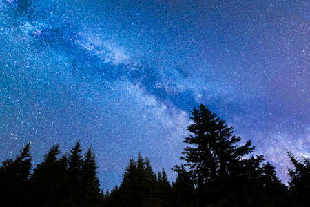 A view of the stars of the blue Milky Way with pine trees forest silhouette in the foreground. Night sky nature summer landscape. Perseid Meteor Shower observation.