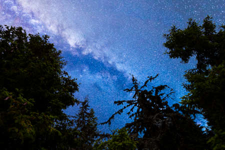 A view of the stars of the blue Milky Way with pine trees forest silhouette in the foreground. Night sky nature summer landscape. Perseid Meteor Shower observation. 免版税图像 - 150020630