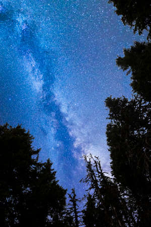 A view of the stars of the blue Milky Way with pine trees forest silhouette in the foreground. Night sky nature summer landscape. Perseid Meteor Shower observation. Vertical.