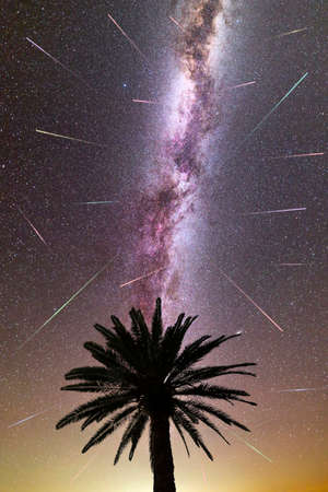 A view of a Meteor Shower and the purple Milky Way with palm tree silhouette in the foreground. Night sky nature summer landscape. Perseid Meteor Shower observation. Vertical. Colorful shooting stars. 免版税图像