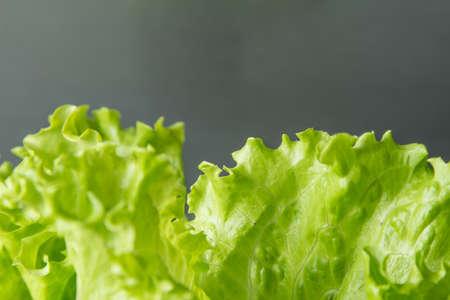 Green salad leaf closeup on with grey background, macro