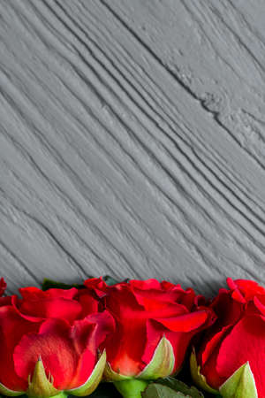 Red rose flowers on grey wooden background with copyspace, close up Stock Photo