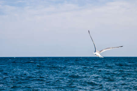 Flying seagull, sea, surface clear sunny day