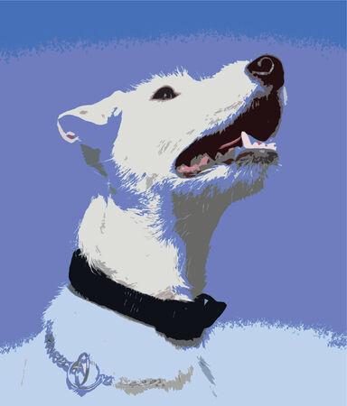 jack russel: jack russel terrier
