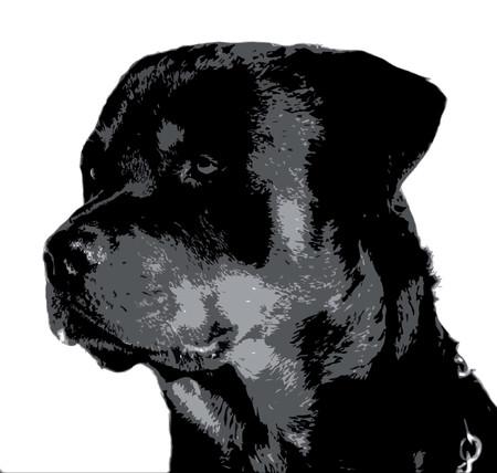 portrait rottweiler noir et blanc