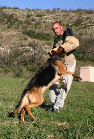 police dog attack photo
