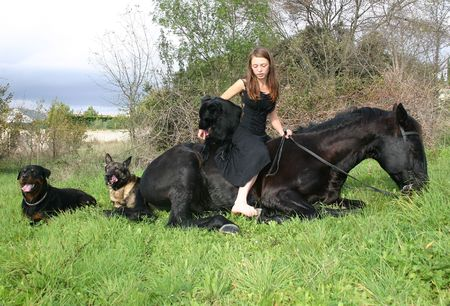 belgian: teen, stallion and dogs