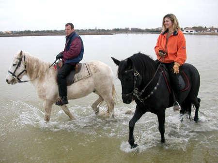 happyness: black and white horses Stock Photo