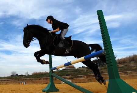 caballo negro: caballo adolescente y negro sportive