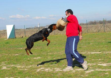 training of police dog Stock Photo