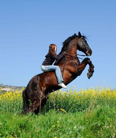 salto de valla: la cr�a de caballos sementales  Foto de archivo