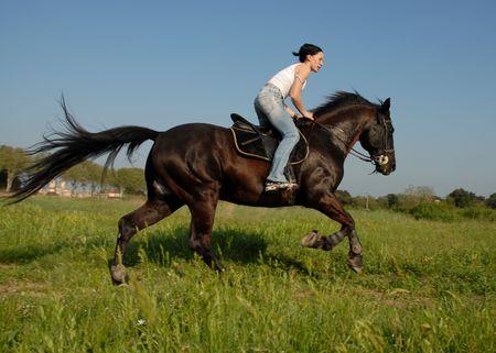 salto de valla: caballo de la velocidad Foto de archivo