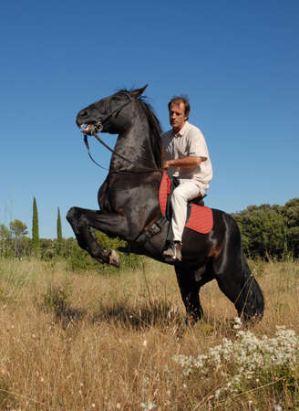 man and rearing stallion photo