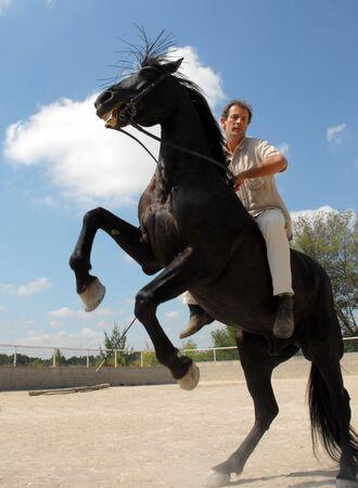 rearing: man and rearing horse